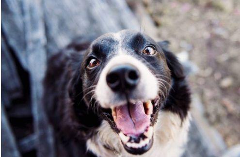Salud dental de su mascota - Formula Medica