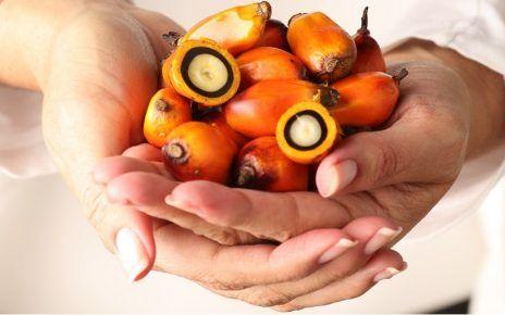 Enfermedades cardiovasculares y su relación con el consumo de aceite de palma - Formula Medica