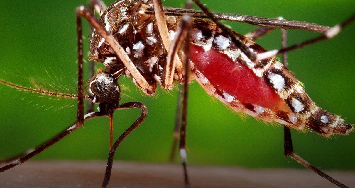 Final del año epidémico para Dengue - Fórmula Médica