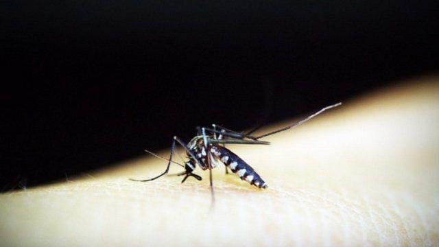 Prevenir el dengue en tiempos de pandemia - Fórmula Médica