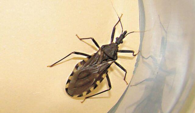 Enfermada de Chagas - Fórmula Médica