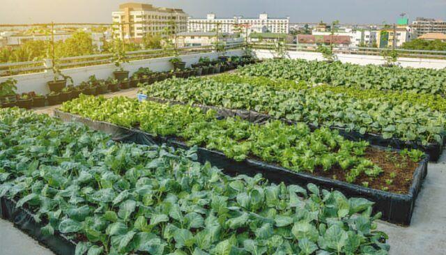 Agricultura Urbana - Fórmula Médica